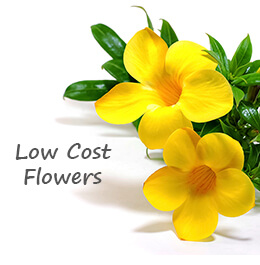 Low Cost Flower Delivery GCC
