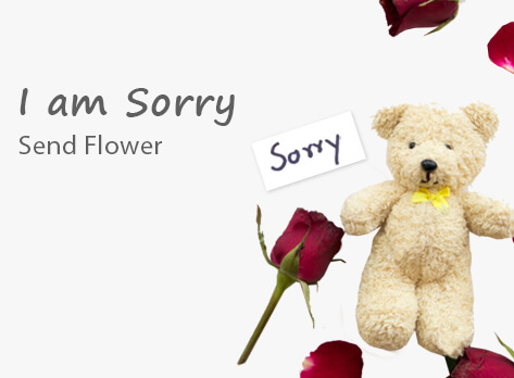I am Sorry Flower Delivery GCC