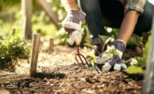 How to plant fruit vegetables in your own garden - An ultimate guide